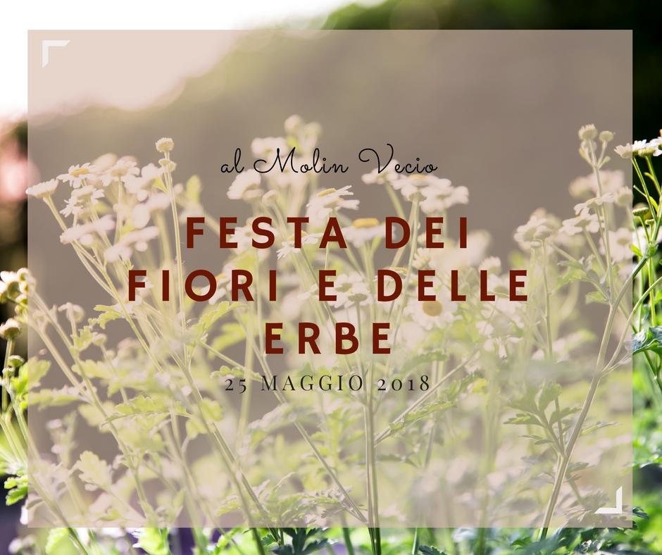 Festa dei fiori e delle erbe (2)
